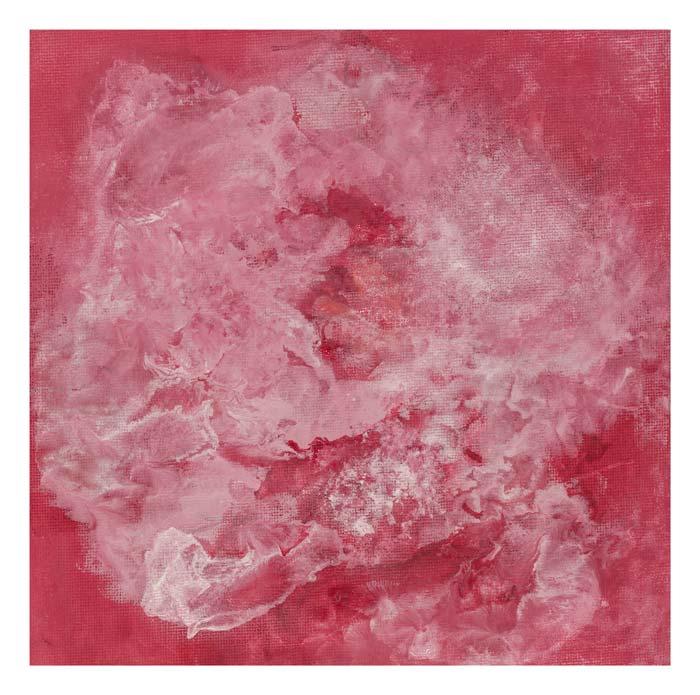 Roze Roos 20 op 20 cm | Te Koop